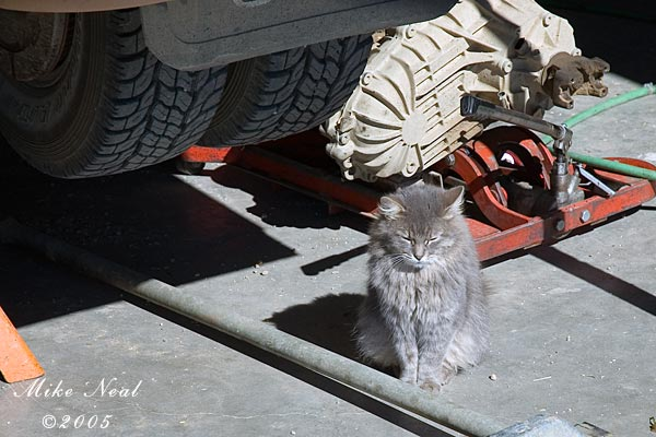 Garage Kitty